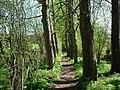 Footpath - Riding Lane Hildenborough - geograph.org.uk - 156994.jpg