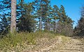 Forêt domaniale des Avant-Monts 05.jpg