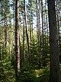Forest in the Czech republic2.jpg