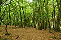 Forest on the Kymin, Monmouth (0168).jpg