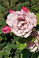 France-000266 - Rose Garden (14711571195).jpg
