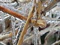Freezing Rain in Canada 2013 94.JPG