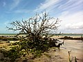 Freshwater beach a tree - panoramio.jpg
