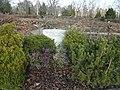 Friedhof zehlendorf 2018-03-24 (39).jpg