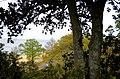 From the Bluff - panoramio.jpg