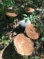 Fungi - Daniel Boone National Forest - Social 04.jpg
