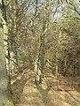 Garblie Wood - geograph.org.uk - 690966.jpg