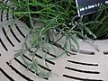Gardenology-IMG 7974 hunt10aug.jpg