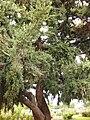 Gardenology.org-IMG 6925 hunt09jun.jpg