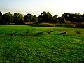 Geese in Warner Park - panoramio (17).jpg