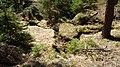 Gelobtbachtal, údolí Klopotského potoka - panoramio (2).jpg