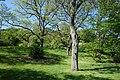 General view - Arnold Arboretum - DSC06718.JPG