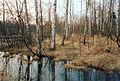 Giebelmoor Birkenbruch nass.jpg