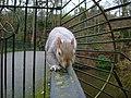Glasgow-squirrel2.jpg