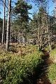 Glen Burn - geograph.org.uk - 420999.jpg