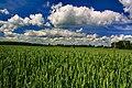 Gmina Narew, Poland - panoramio (102).jpg