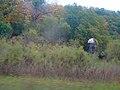 Gorman Farm - panoramio.jpg
