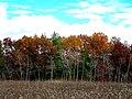 Governor Dodge State Park during Autumn - panoramio (2).jpg