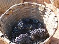 Grapes in Kelin.jpg
