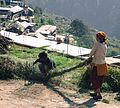 Grass rope making WTK20150915-IMG 0459.jpg