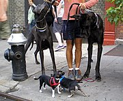Chihuahuas and Great Danes.