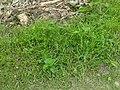 Green Grass 2017-05-29.jpg