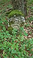Grenzsteine im Wald zwischen Tauberbischofsheim und Großrinderfeld - 8.jpg