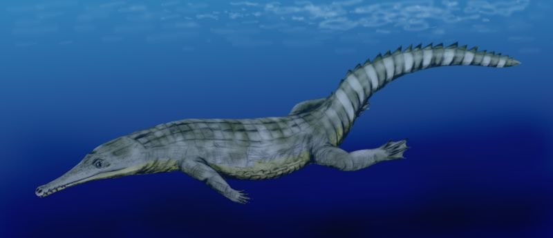 Guarinisuchus munizi