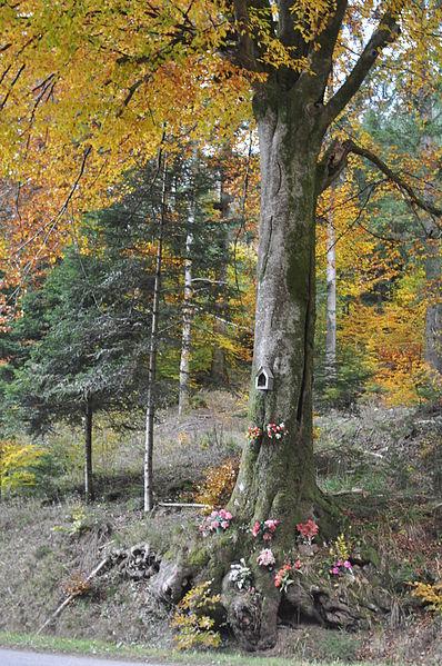 File:Hêtre votif dans le massif du ballon d'Alsace, France.jpg