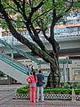 HK CWB HKCL tree 朴樹 Chinese Hackberry n escalators Nov-2013 05.JPG
