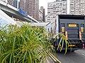 HK STT 石塘咀 Shek Tong Tsui 豐物道 Fung Mat Road flora green leaves March 2020 SS2 07.jpg
