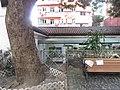 HK Wan Chai 舊灣仔郵政局 Old Wan Chai Post Office plant tree trunk October 2017 IX1 house.jpg