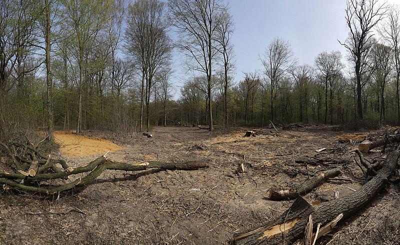 File:Hambacher Forst 30.03.2014 02.jpg