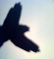 Hand shadow bird.jpg