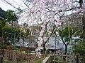 Hasetera Temple 長谷寺 - panoramio.jpg
