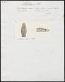 Herpetodryas serra - kop - 1700-1880 - Print - Iconographia Zoologica - Special Collections University of Amsterdam - UBA01 IZ12100137.tif