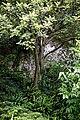 Highdown Gardens, Worthing, Chalk Pit Garden 2.jpg
