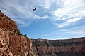 Hiking up the canyon on South Kaibab Trail.jpg