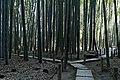Hokokuji bamboo forest (5712271526).jpg