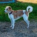 Hond bei der Fuurt zu Uewerfeelen-101.jpg