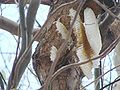 Honey comb3pl.jpg