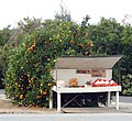 Honor Orange Stand on Terracina, Redlands, CA 1-2012 (6727025845).jpg