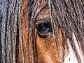 Horse Eye closeup.jpg