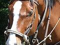 Horse Profile.JPG