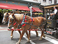 Horse and Carriage Savannah.jpg