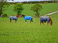 Horses at Blairs Farm - geograph.org.uk - 178354.jpg