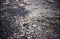 Horseshoe I 'Isthmus' patterned ground.jpg