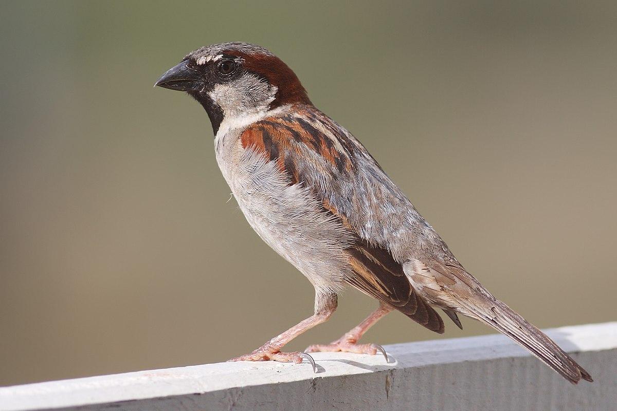 Krátke mláďatá veľké vtáky