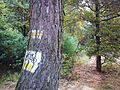 Huciska Puszcza Zielonka trails.jpg