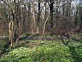 Hugset Wood footpath - geograph.org.uk - 1812399.jpg